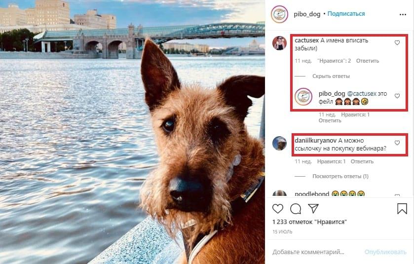 Вот пример поста аккаунта @pibo_dog, который посвящен воспитанию и дрессировке собак. В посте с итогами конкурса ребята допустили ошибки и честно признали это. Но зато они раздали скидки на популярный курс всем подписчикам, а после публиковали бесплатные материалы на темы, которые вызвали больше всего вопросов. Обратите внимание, потенциальные покупатели сразу начали писать под постом
