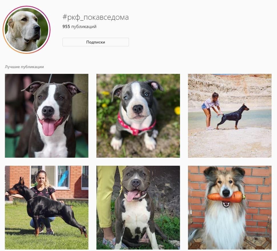Например, можно продвигать хештег, с помощью которого пользователи будут делиться фотографиями и достижениями карантинного периода